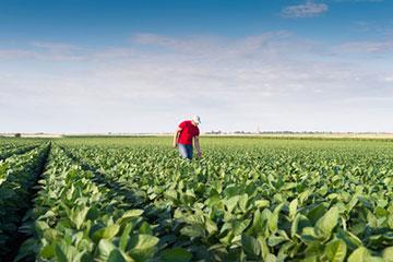 Cumulabilità tra reddito di lavoro autonomo in agricoltura e Naspi